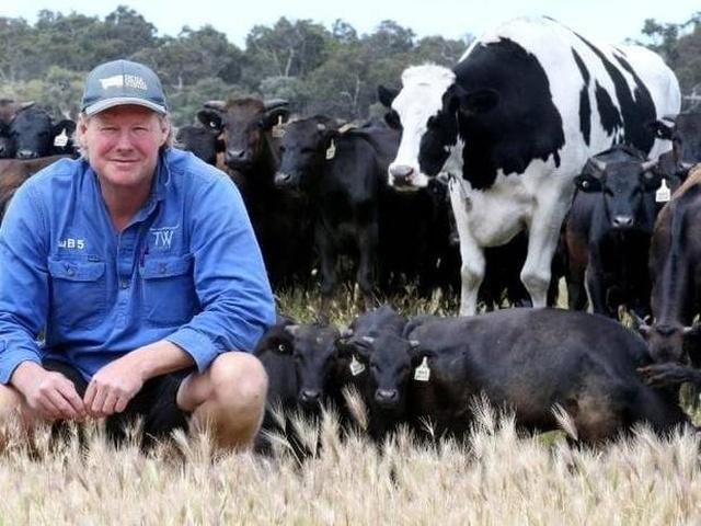 cow_australia_05